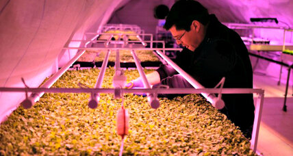 Underground and on rooftops, farms take root in big cities