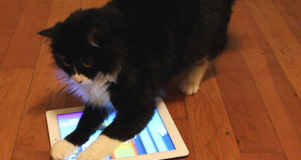Tablet apps are the cat's meow