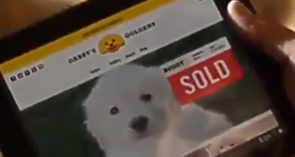 GoDaddy pulls Super Bowl ad: Even a puppy isn't a sure thing (+video)