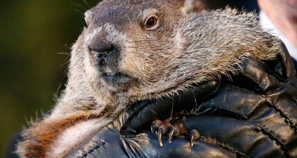 Prognosticating marmot forsees six more weeks of winter