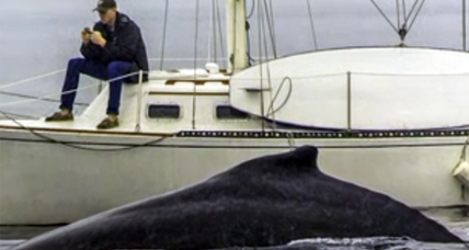 Is your phone making you clueless? Man misses whale from two feet away