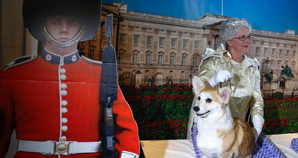 Could corgis go extinct in England? (+video)
