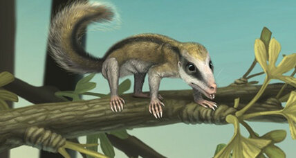 Newly-discovered Jurassic mini mammals lived among dinosaurs