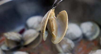Mussels, clams hit by ocean acidification: how effects could be forestalled
