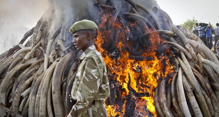 Kenya burns trove of ivory in first-step promise to destroy stockpile (+video)
