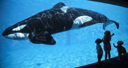 Readers write: Plight of captive whales, curtailing hate will end war, purpose of elections