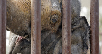 The end of an era? Ringling Bros. to retire its elephant act (+video)