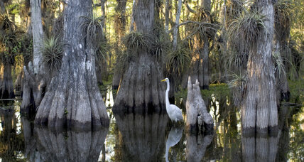 Will Florida's legislature decide the fate of the Everglades? (+video)