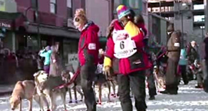 Due to lack of snow, Iditarod forced further north in Alaska