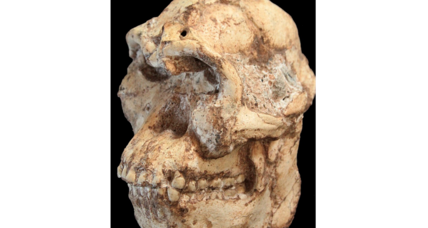 Early human relative Little Foot may have co-existed with Lucy, say scientists