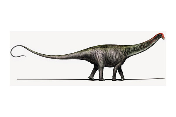 Abydosaurus Was A Type Of Sauropod Group Huge Plant Eating Dinosaurs Which Had Light Skulls Because Their Head At The End Long Neck
