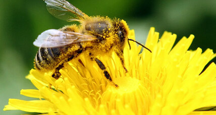 Can bees become addicted to pesticides?