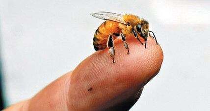 Are bees getting hooked on nicotine-laced pesticides?