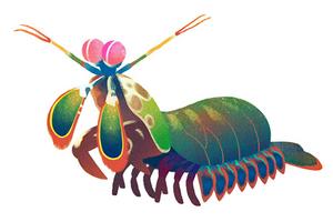 why did google choose those animals for its earth day quiz rh csmonitor com Cartoon Shrimp Clip Art Giraffee Clip Art