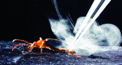 Can noxious beetle bursts make better engines?