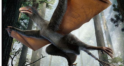 New bat-like dinosaur had wings. Scientists don't know why.