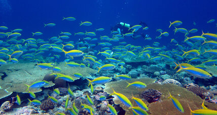 Study: Protecting tropical reefs need not be a zero-sum game