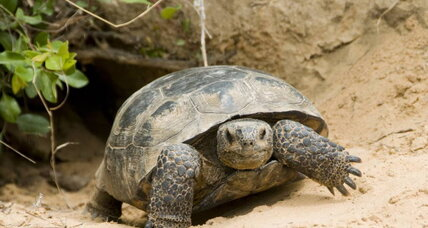 Please learn the difference between tortoises and sea turtles, say Florida wildlife officials