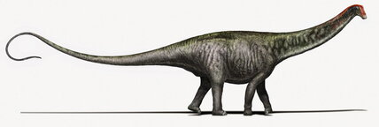 Is the Brontosaurus really back?