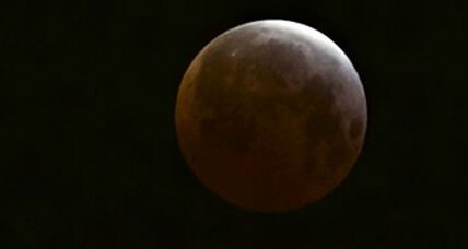 Short but rosy: The 'blood moon' eclipse