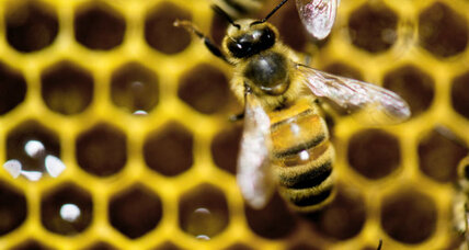 Why more research needs to be done to save honey bees