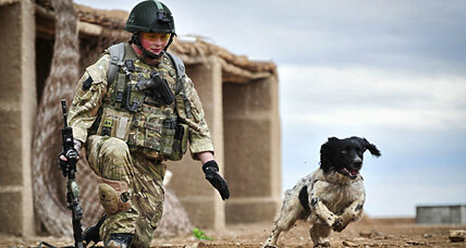 Canine compassion: Should military dogs be reunited with their human handlers?