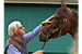 American Pharoah jockey gets third try at Triple Crown