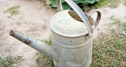 Water-saving tips for your garden