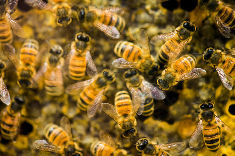 Scientists praise US government plan to help bees, butterflies