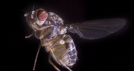 Flies time when they're having fungus, say scientists