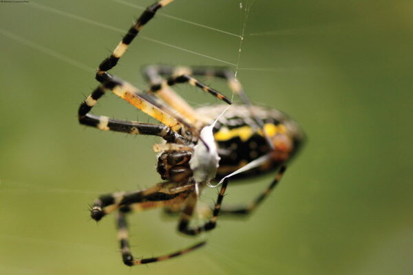 What if spiders could fly? In Chicago, perhaps they do. - CSMonitor.com