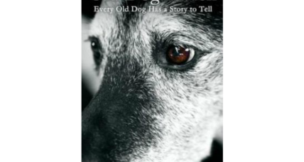 Reader recommendation: Old Dog Haven