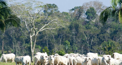 How Brazilian beef industry became latest ally in fight against deforestation