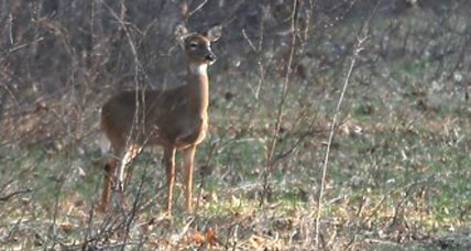 Why fewer deer hunting permits will be issued this year