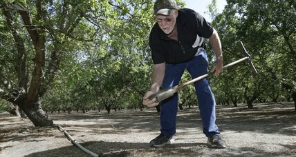 California farmers agree to cut water use. Enough to stem the drought?