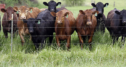 White House cracks down on antibiotics in meat