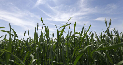 Monoculture shows financial, environmental costs to US