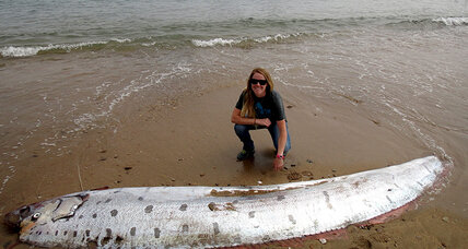 Humongous oarfish washes onto California shore (+video)