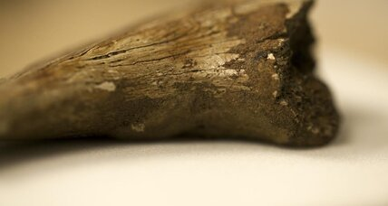 Fossilized dinosaur blood? Blood cells found in 75-million-year-old bones.