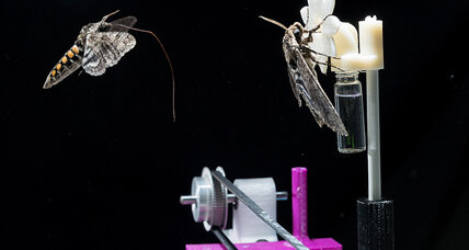 Are moths smarter than we think?