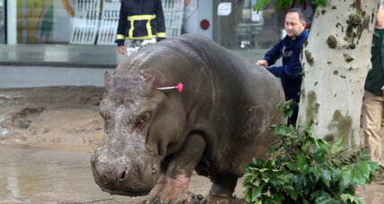 Tbilisi flood: Zoo animals still loose in Georgia capital