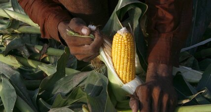 Opinion: It does not take GMOs to feed the world