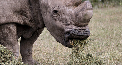 Can 3D-printed rhino horns slow down the poaching industry?