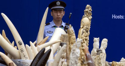 New China policy could save elephants (+video)