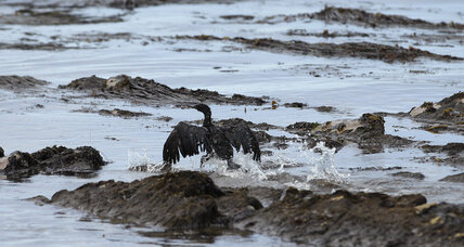 California oil spill: Regulators, lawmakers scrutinize company response