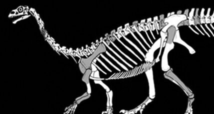 New Jurassic dinosaur found hiding in fossil collection