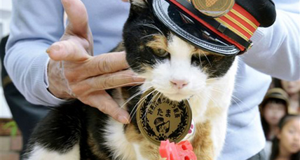 Japan mourns Tama, feline stationmaster and national icon