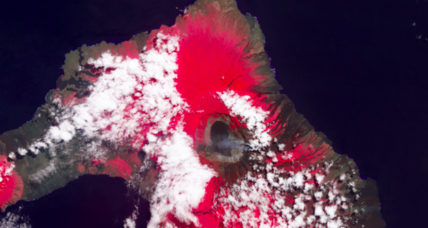 What happens when a volcano erupts in the Galápagos?