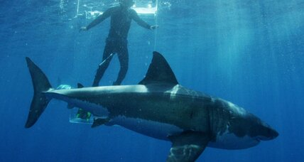 With real shark week in the offing, Southern beach-goers show little fear