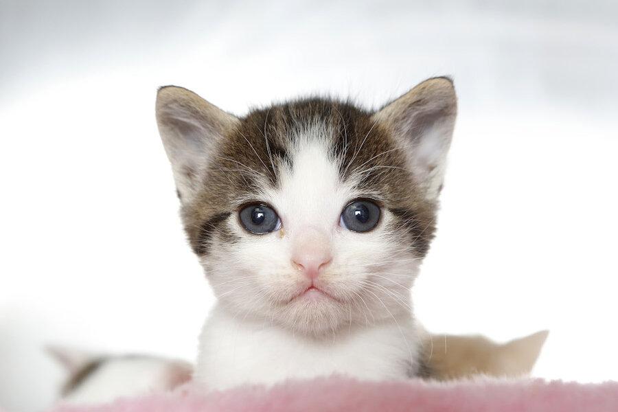 Pet Amour Cat